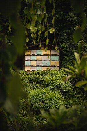 Bee house apiary