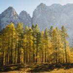 Autumn Larch on mountain Slemenova Špica