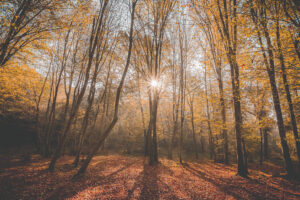 Autumn sunny morning in Bizeljsko
