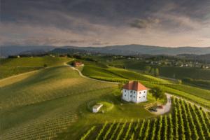 Škalce vineyards