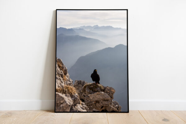 Alpine Chough Bird preview framed picture